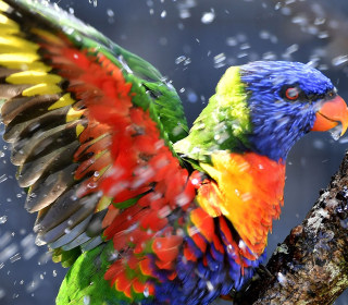 A Vibrant Lorikeet and More in This Week's Best Animal Pictures