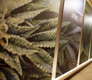 Court Upholds Ban on Gun Sales to Marijuana Card Holders