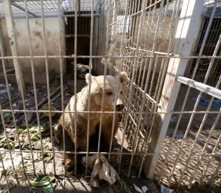 Neglected Animals Starve in Mosul Zoo