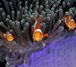 Sea Life Captured in Stunning Photographs