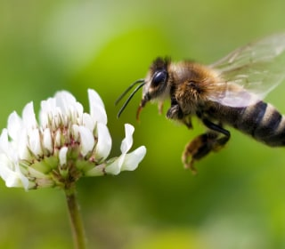 Scientists Have Some Wild Ideas for Solving Our Big Bee Problem