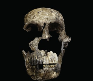 Early Human Homo Naledi May Have Made Tools, Buried Dead