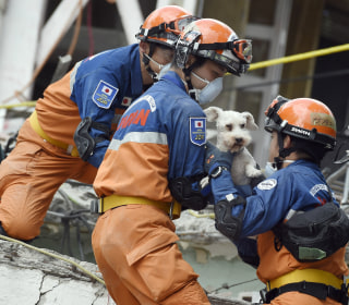 Dog Pulled From Earthquake Rubble Gives Hope to Rescuers
