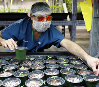 Puerto Rico's Medical Marijuana Industry Takes a Hit From Hurricane