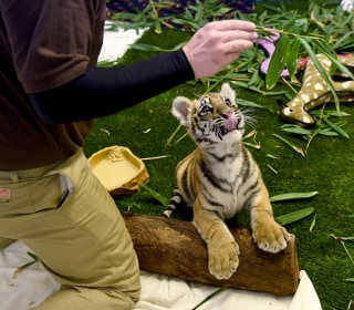 Agents Make Arrests, Rescue Smuggled Exotic Animals in 'Operation Jungle Book'