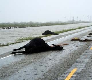 Economists Say Farmers Lost $200 Million During Hurricane Harvey