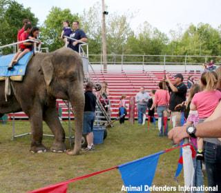 Elephants Deserve Legal 'Personhood,' New Lawsuit Argues in Connecticut