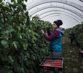 British fruit left to rot as looming Brexit squeezes seasonal labor
