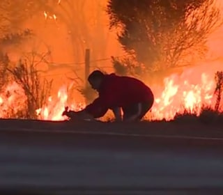 Man who saved rabbit from California wildfires explains his decision