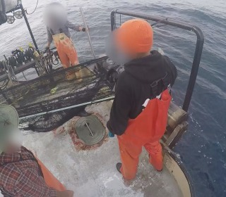 Undercover video shows huge nets blamed for killing dolphins, whales, turtles