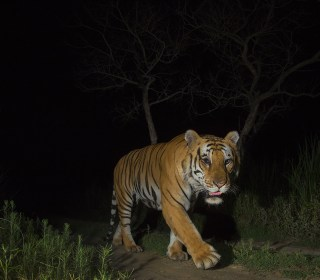 Human activity forcing more animals into nocturnal lifestyle, research shows