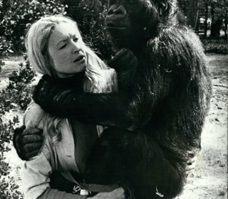 Koko, the beloved gorilla who learned to use sign language, has died