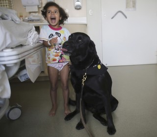 Therapy dogs love their jobs. Is your pup cut out for it?