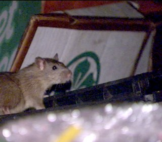 Trash piles, rats could be causing typhus outbreak in L.A.