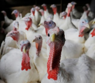 1 dead, 164 sick in salmonella from raw turkey, CDC says