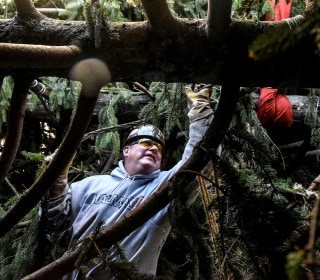 The Rockefeller Christmas Tree's journey from upstate to the plaza