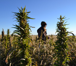 New agriculture bill legalizes hemp. That doesn't mean it's unregulated.