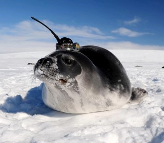 How seals helped scientists explain huge holes in the Antarctic ice