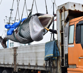 Japan resumes commercial whaling after three decades