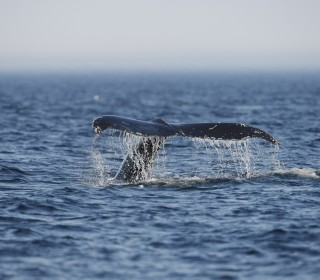High-tech thermal cameras could protect whales from deadly collisions with ships