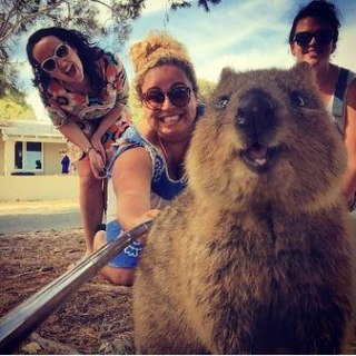 #QuokkaSelfie: Photos With Cute Aussie Animal Is the New Trend