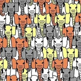 Can You Find the Panda Hidden Among the Elephants? Try the Latest Viral Puzzle