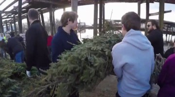 video will begin in 3 now christmas trees - Christmas Tree Farm Louisiana