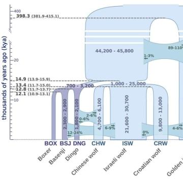 Image: Genetic chart