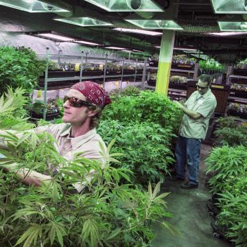 Image:  Medicine Man marijuana dispensary and grow house