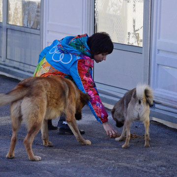 Image:  A volunteer feeds stray dogs ahead of the Sochi 2014 Winter Olympics