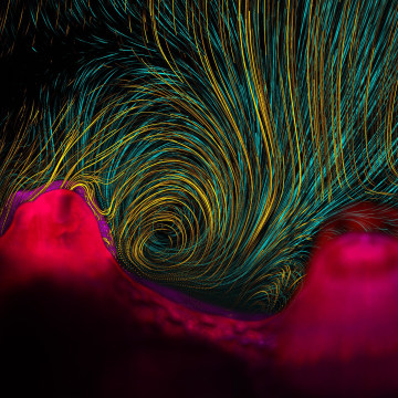 Image: Coral habitat