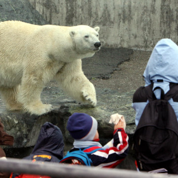 Image: Polar bear Anton in 2008