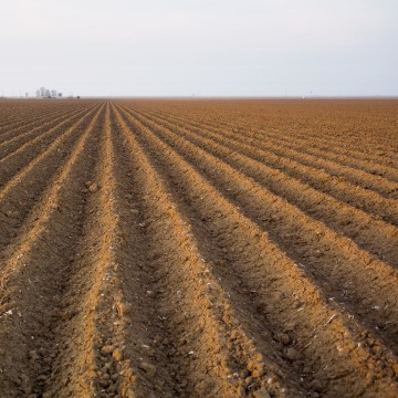 Image: A dry field in the Central Valley near Firebaugh, Calif.
