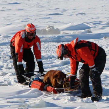 Image: Cutter Bristol Bay assists dog stranded on Lake St. Clair