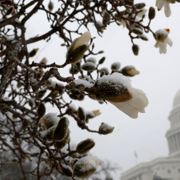 Image: Spring Snowstorm Brings Winter Weather Back To Northeast