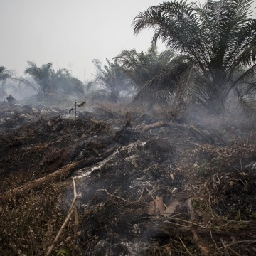 Image: Fire burns a palm oil plantation on March 1, 2014 in Siak, Riau, Indonesia