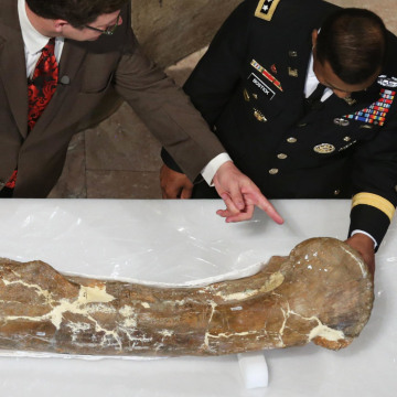 Image: National Museum Of Natural History Previews Tyrannosaurus Rex Exhibit