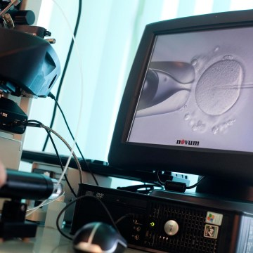 Image: A doctor injects sperm directly into an egg during an IVF procedure
