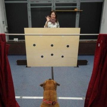 Image: Dog experiment