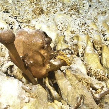 Image: The skull of Naia as it was discovered in 2007