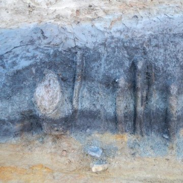 These crumbling wooden posts may have been part of a fish trap along the Thames more than 11,000 years ago.