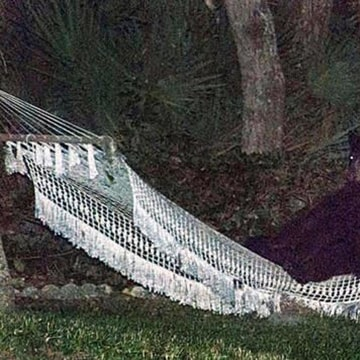 A black bear sits in a backyard hammock