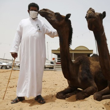 Image: File photo of a man wearing a mask posing with camels at a camel market in the village of al-Thamama near Riyadh