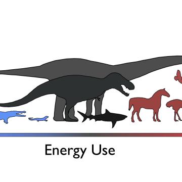 Image: Energy use