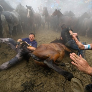Image: Rapa Das Bestas Wild Horses Festival In Sabucedo