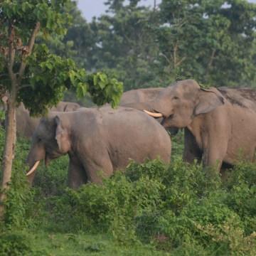 Image: INDIA-WILDLIFE-ELEPHANT