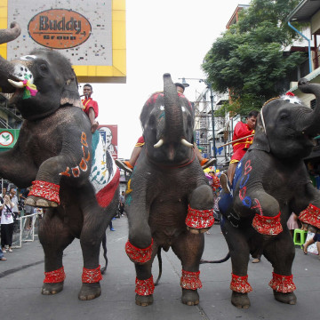 Image: Elephants perform to celebrate the 2014 World Cup in Brazil, along the Khaosan tourist street, in Bangkok