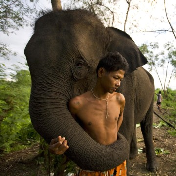 Image: Urban Elephants Roam The Streets of Bangkok