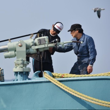 Image: Crew of a whaling ship check a whaling gun
