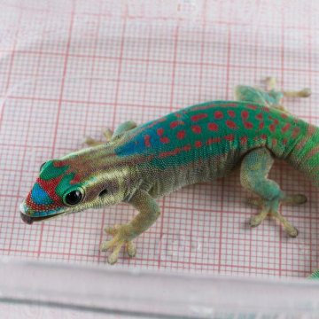 Image: Gecko